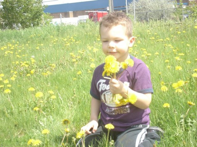 My grandson is playing in a field of dandelions. A bylaw forbids walking on the grass, along with entering or leaving a park except by a path.